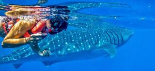 Vive Cancún y experimenta, el nadar con tiburones.