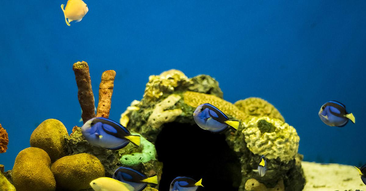 acuario veracruz