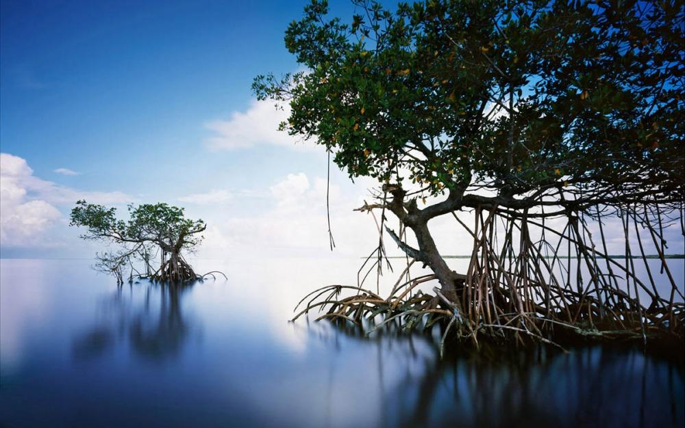 2915360-Everglades-USA-1000-1464523250