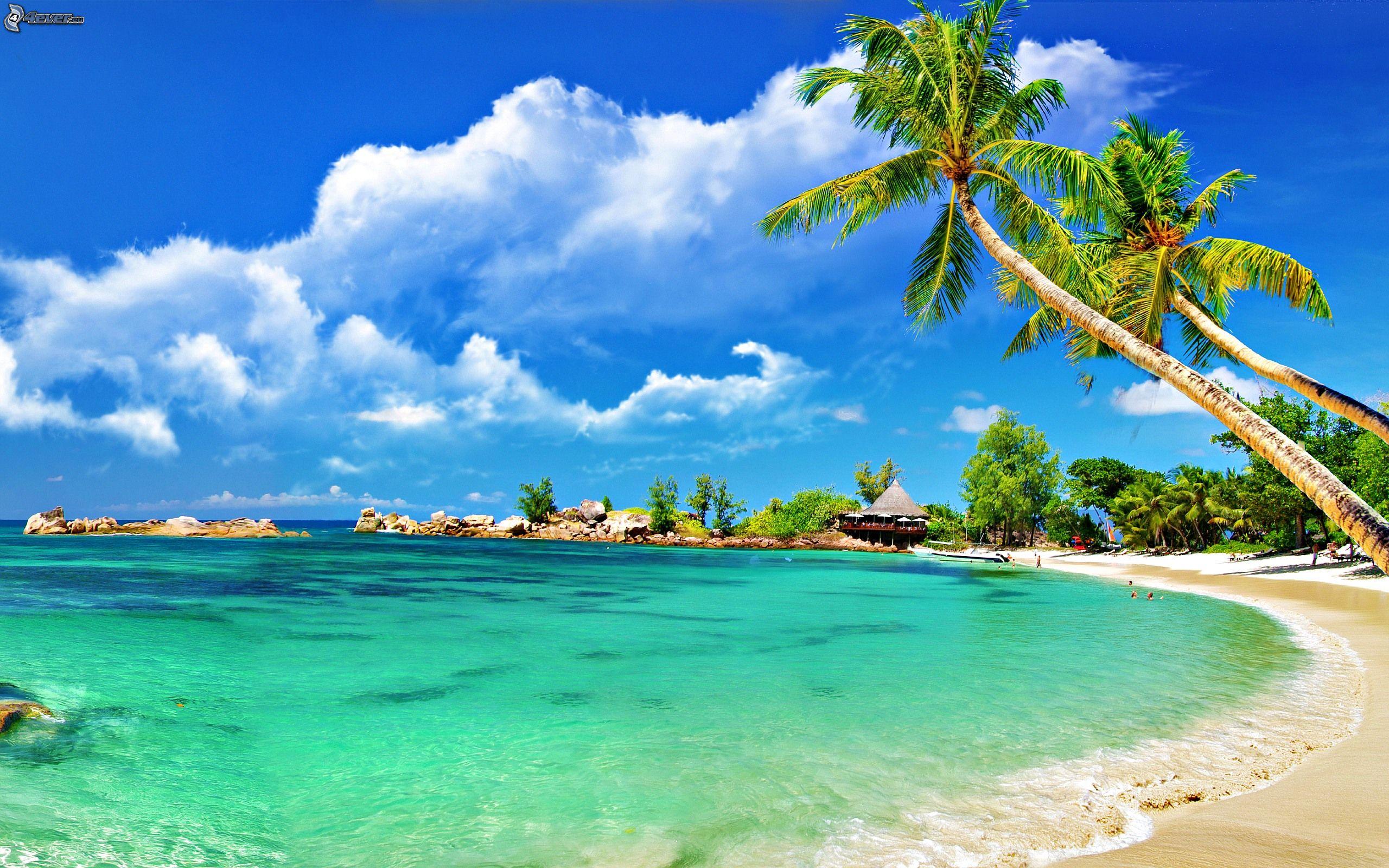 palmeras-en-la-playa,-mar,-casa-junto-al-mar-236183